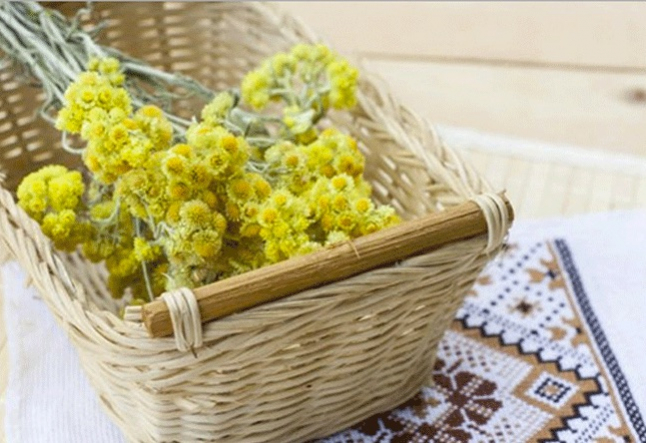 all about helichrysum oil
