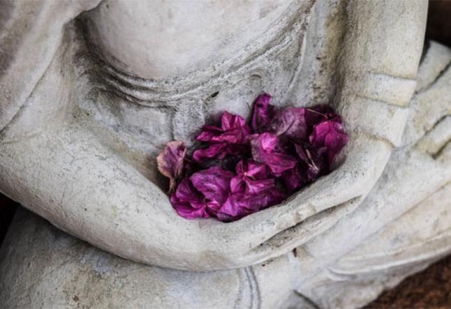 niyama - one yogi's forced path to just be
