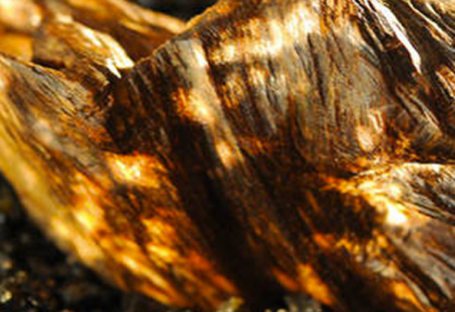 the strange and wonderful alchemy of agarwood