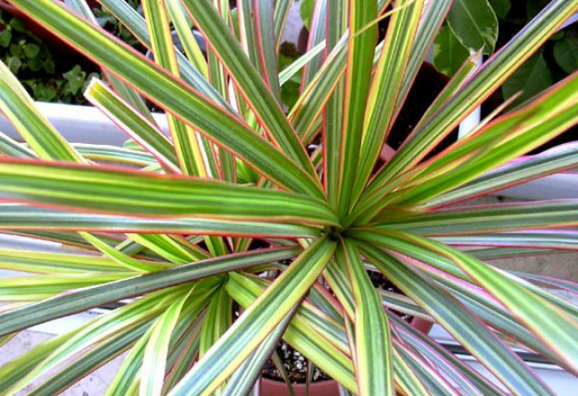 houseplants can help clean indoor air pollution