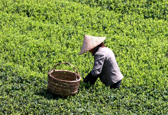 the zen of tea