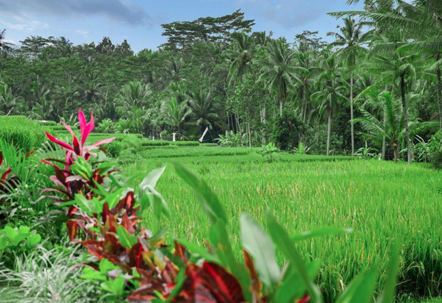 several why's & how's to building a retreat in bali
