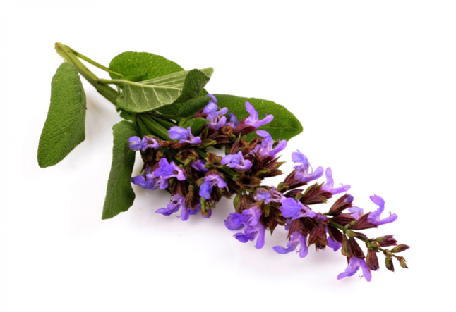 the benefits of clary sage