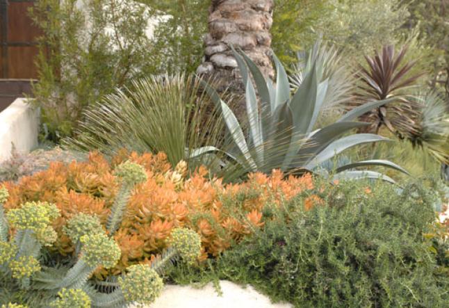 eco gorgeous gardening