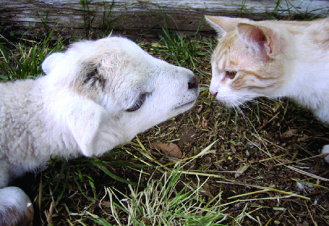 compassion for all creatures