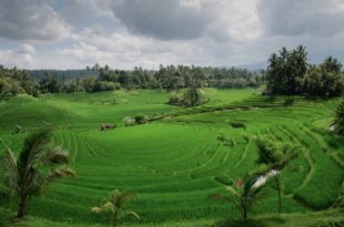 discovering bali