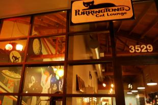 Purrington's Cat Lounge