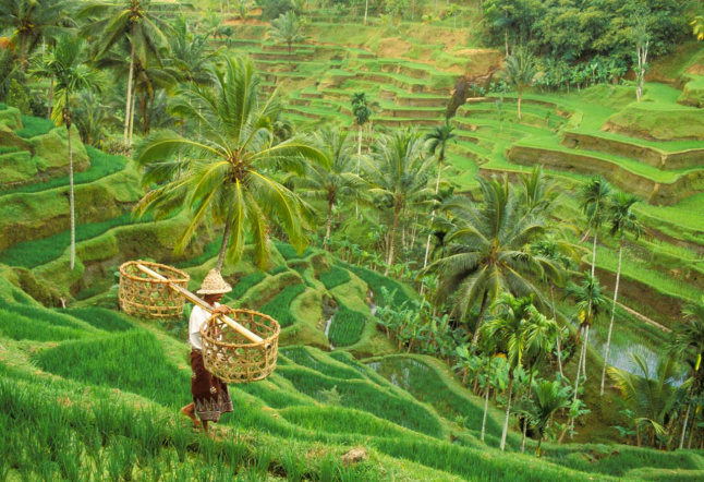 bali subak: an ancient irrigation system