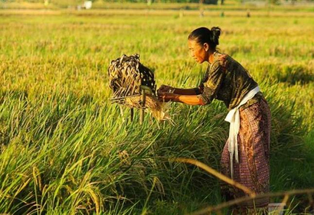 bali subak: an ancient irrigation system